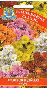 Хризантемы садовые - посадка, уход, особености